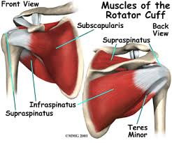 Diagram of Rotator Cuff